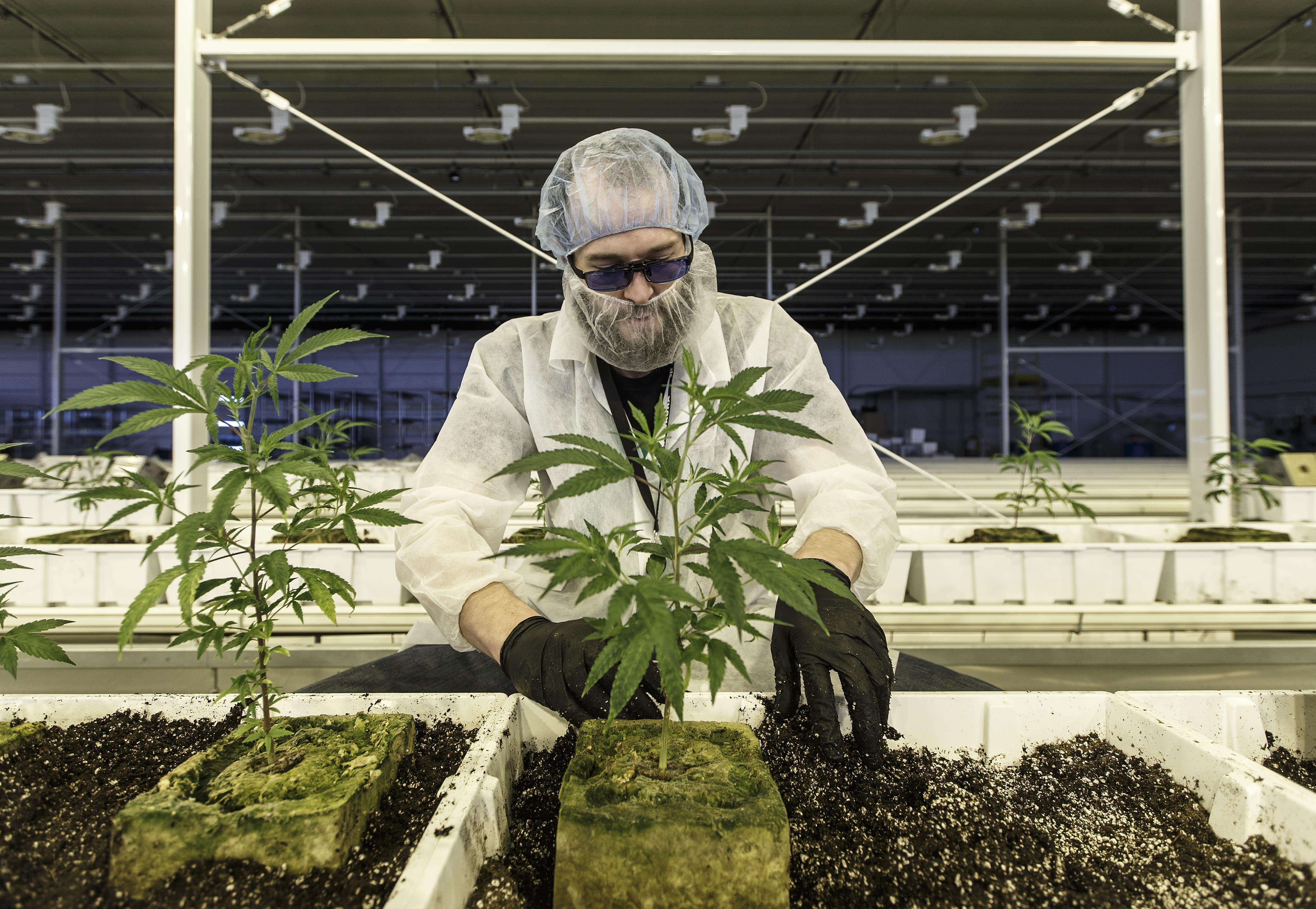 Aurora Cannabis Has Key Strategies For The U.S. Market, Says Michael Singer