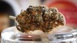 Foremost Recreational Pot Business License Anticipated By Month-End