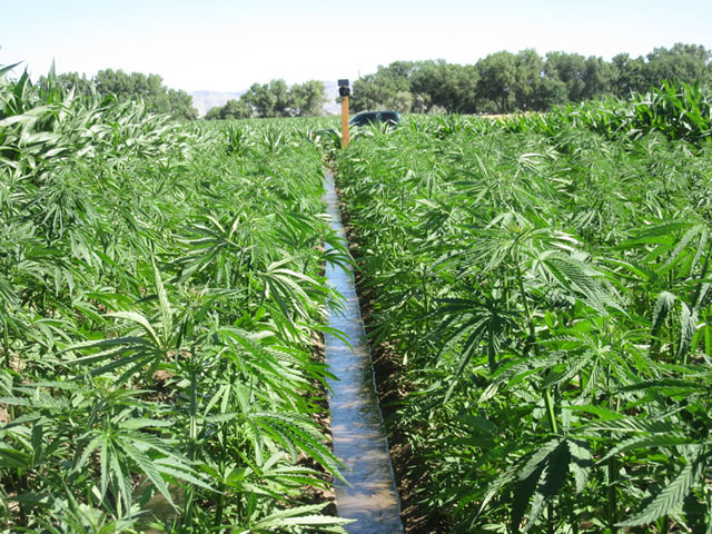 USDA Wants Farmers To Pay Fees For Hemp Promotions