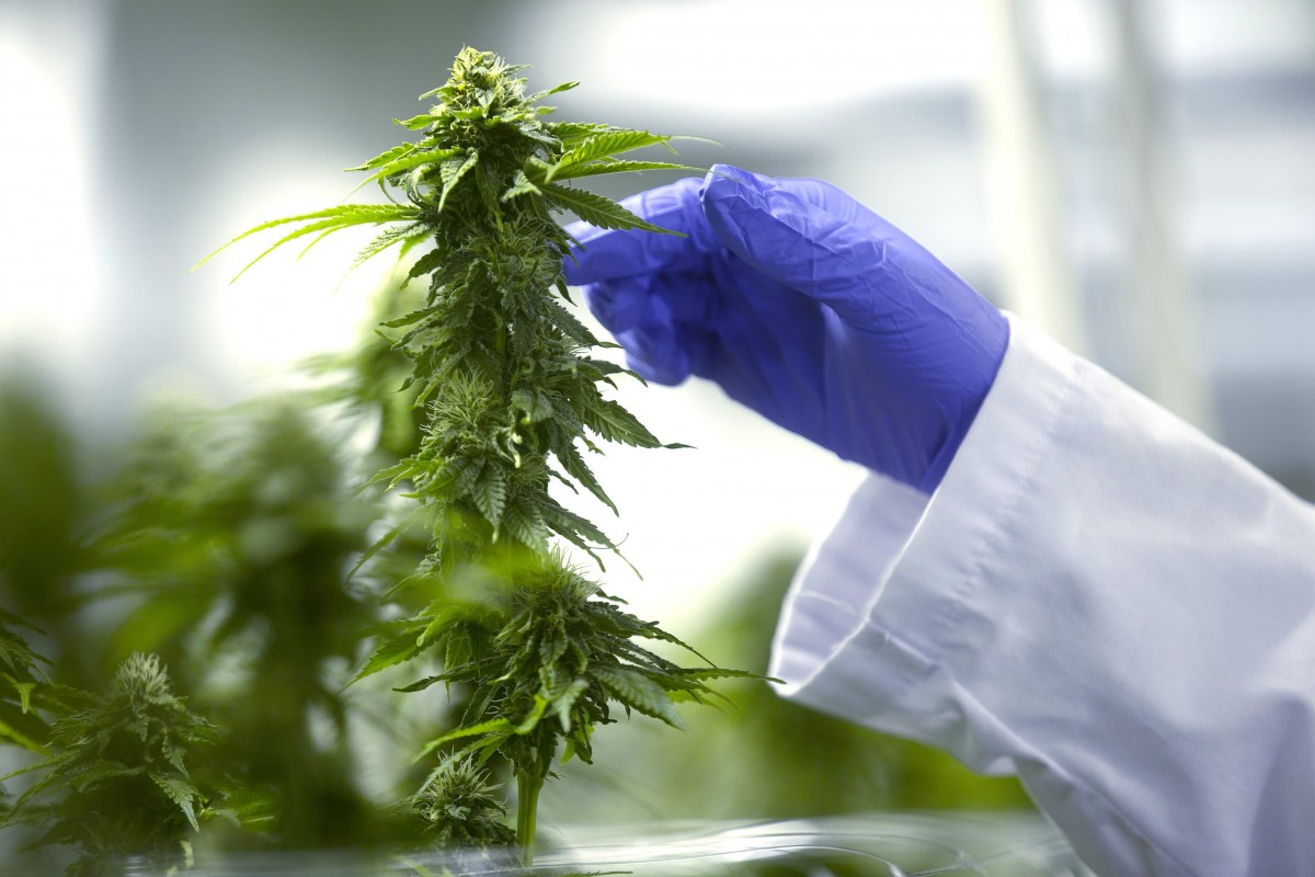 Young Population Using Weed Regularly Can Face Heart Issues Research