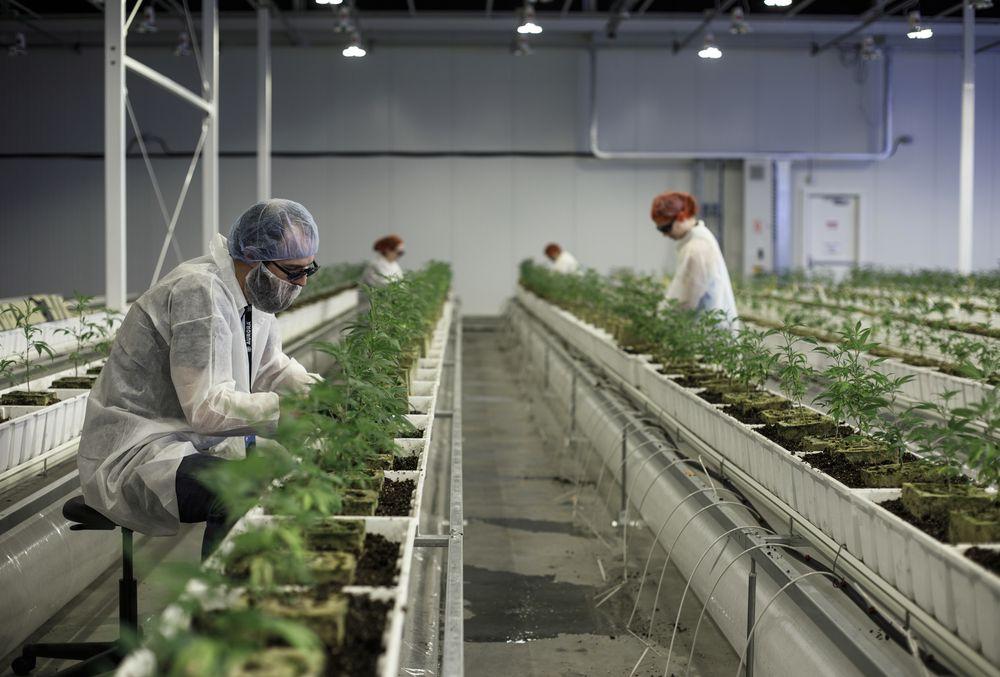 Marijuana Drying & Curing Equipment