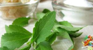Stevia Market